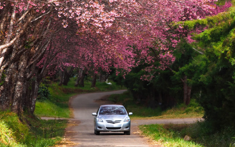 fruehlings-check-auto-kontrolle-2019-autoplus-suedtirol-alto-adige-controllo-primavera-auto